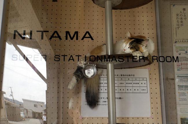 ニタマ2.jpg